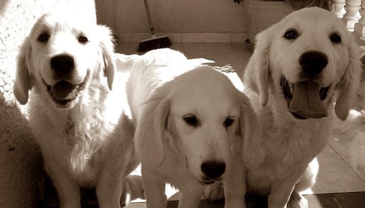 equipo-canino